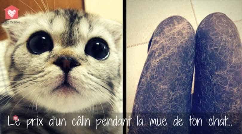 mue-du-chat-calin