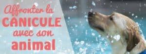 canicule-animal