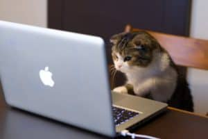 chat-travail