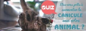 canicule-animal-quiz-chat-chien