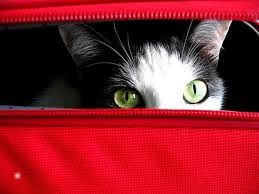 chat-valise