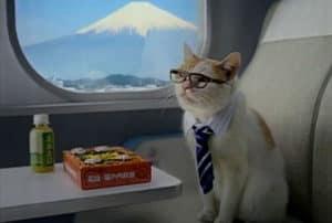 chat-voyage-etranger