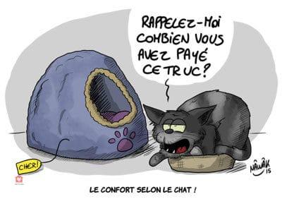 Le-confort-selon-le-chat-le-journal-de-siri