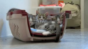 chatons prison 3