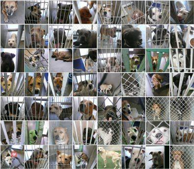 euthanasies-refuge-portraits