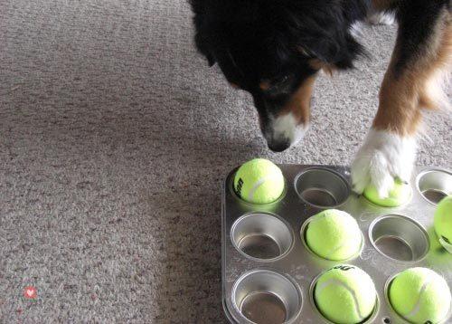 fabriquer-jeu-chien-puzzle