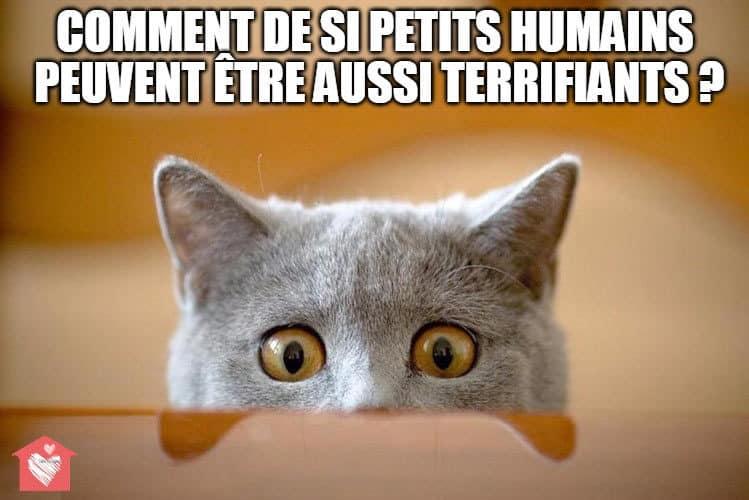 chat-Noel-nouvelles-personnes
