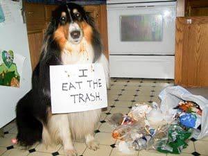 """""""J'ai fait les poubelles"""""""