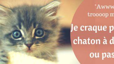 Blog Take Me Home Vivez En Harmonie Avec Votre Animal De Compagnie