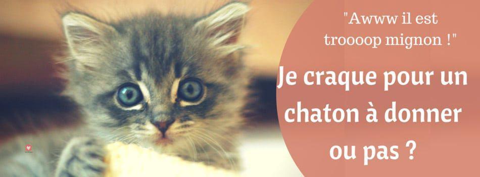 Chaton A Donner Est Ce Que Je Craque Blog Take Me Home