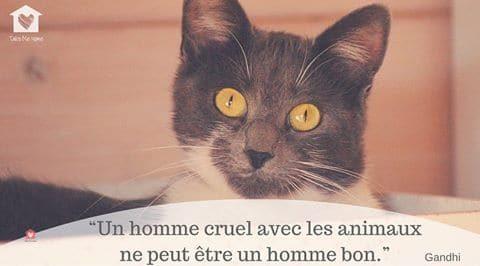 citations-animaux-04