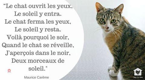 citations-animaux-05