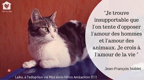 citations-animaux-06