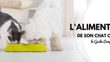 guide alimentation chat et chien