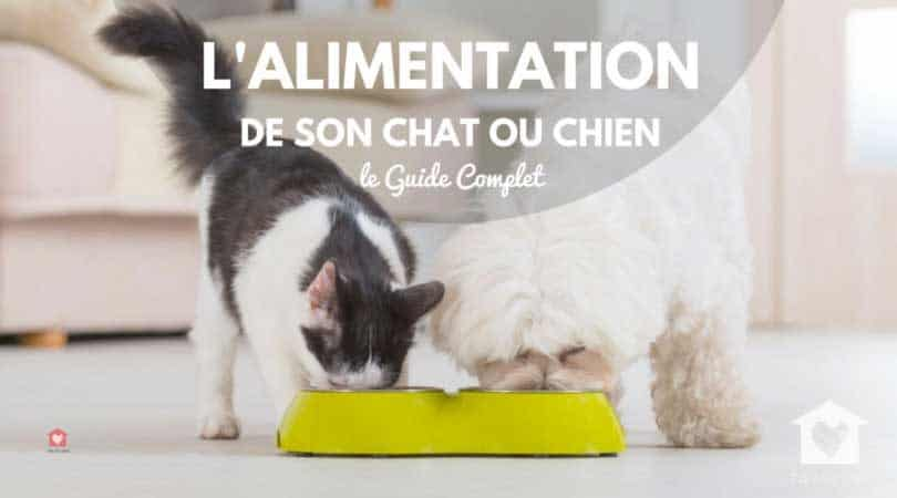 choisir alimentation chat chien guide