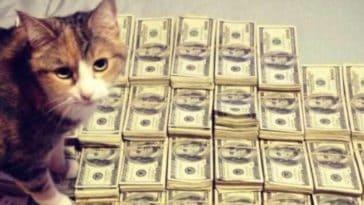 combien coute un chat