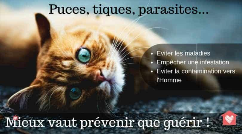 puces-tiques-prevention