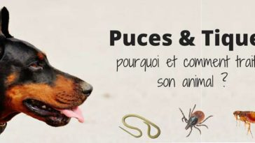 puces tiques parasites prevention