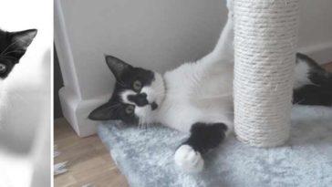 chaton non sevre kebek