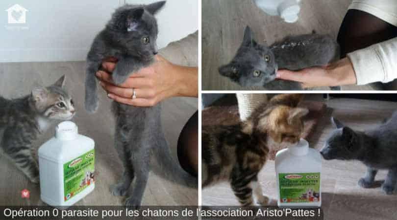 poudre traitement parasites chatons