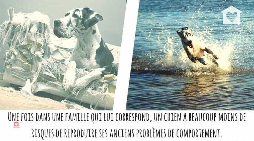 adopter un chien en refuge problèmes de comportement