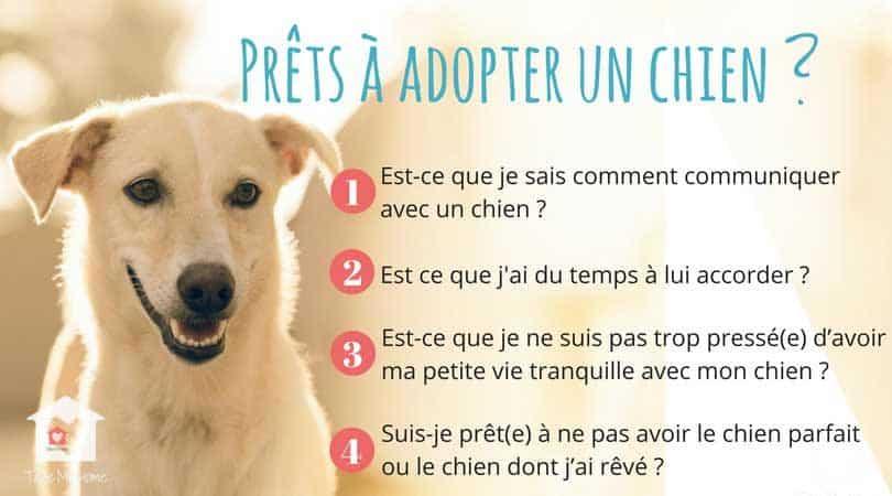questions a se poser avant d'adopter un chien