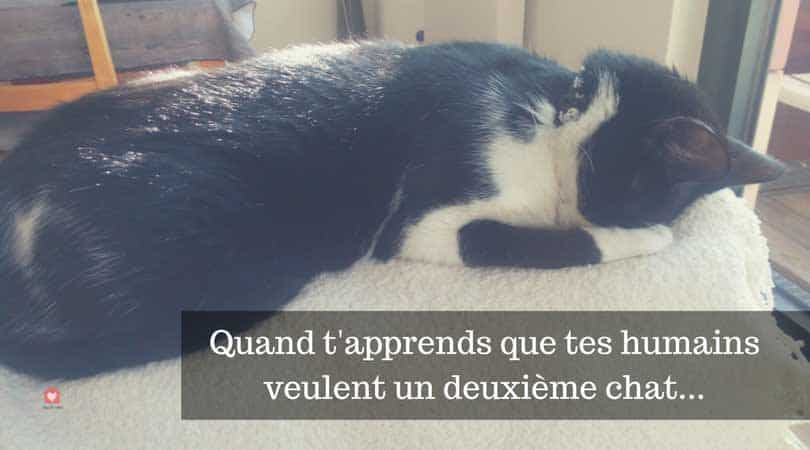 Cohabitation Entre Chats