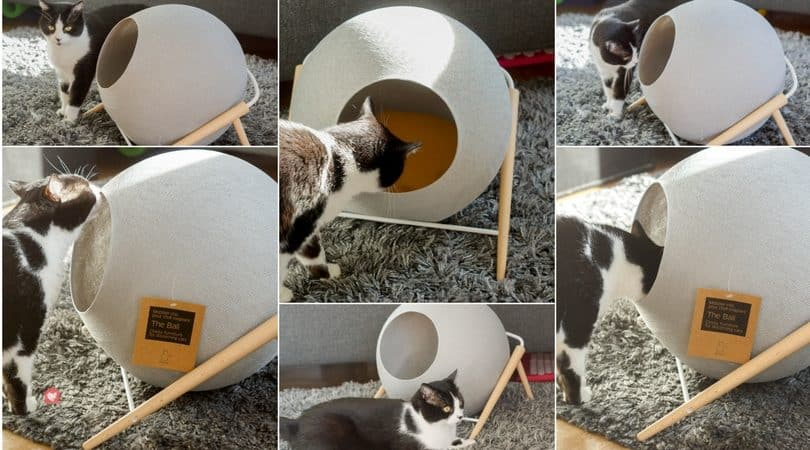 avis meyou test chat couchette la ball