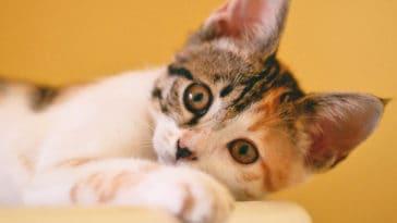 sterilisation chat chien explications
